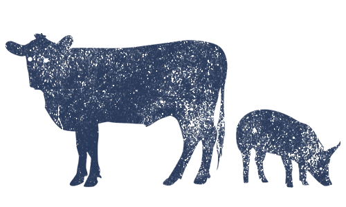 Cow and a Pig icon